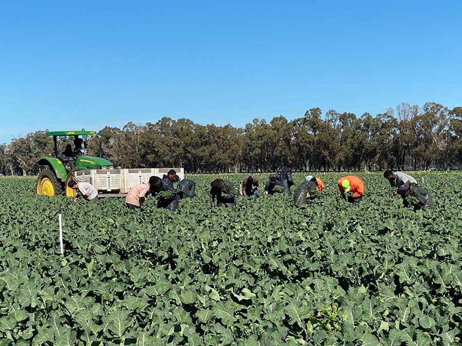 Labour Webinar for WA Hort Growers