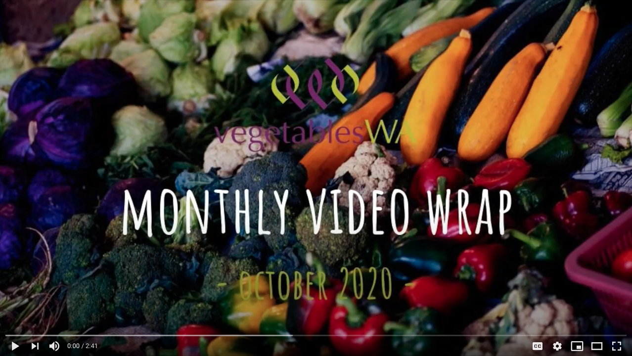 Monthly Wrap October 2020